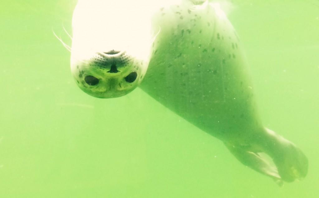 Seehundaufzuchtstaion Norddeich Seehund Robben