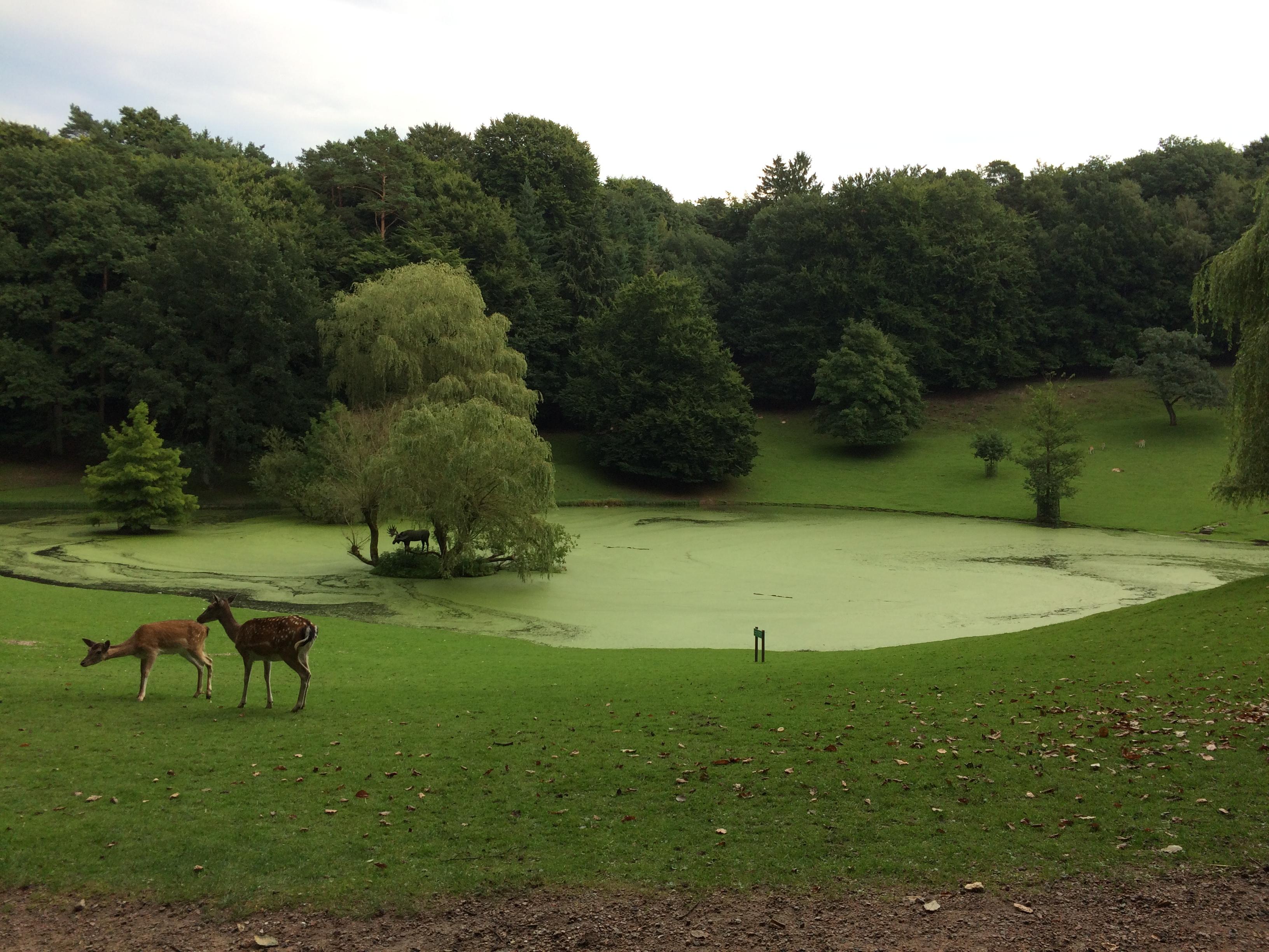 Wildpark Schwarze Berge Freigehege Dammwild