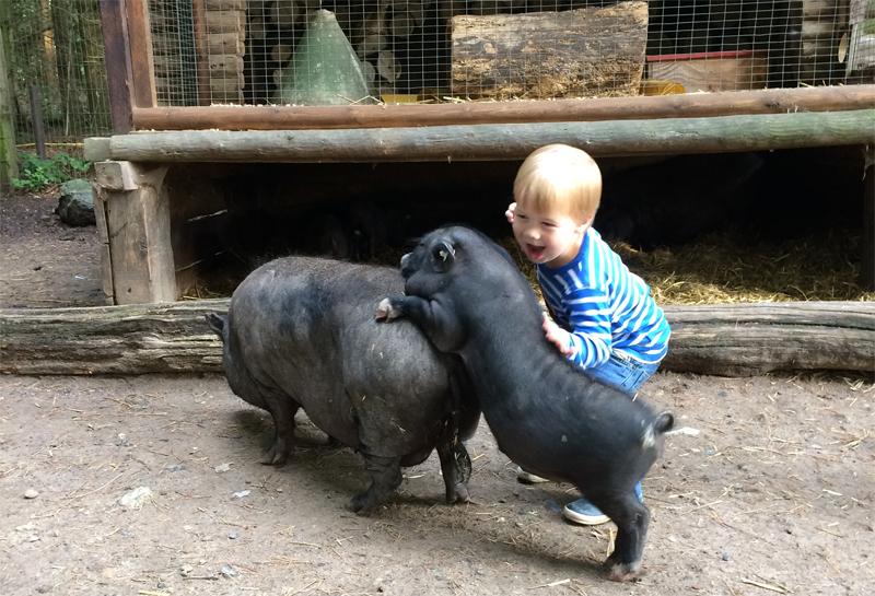 Für jede Schweinerei zu haben: Der Hamburger Knirps freut sich jedes Mal riesig über die Hängebauschweine des Wildparks