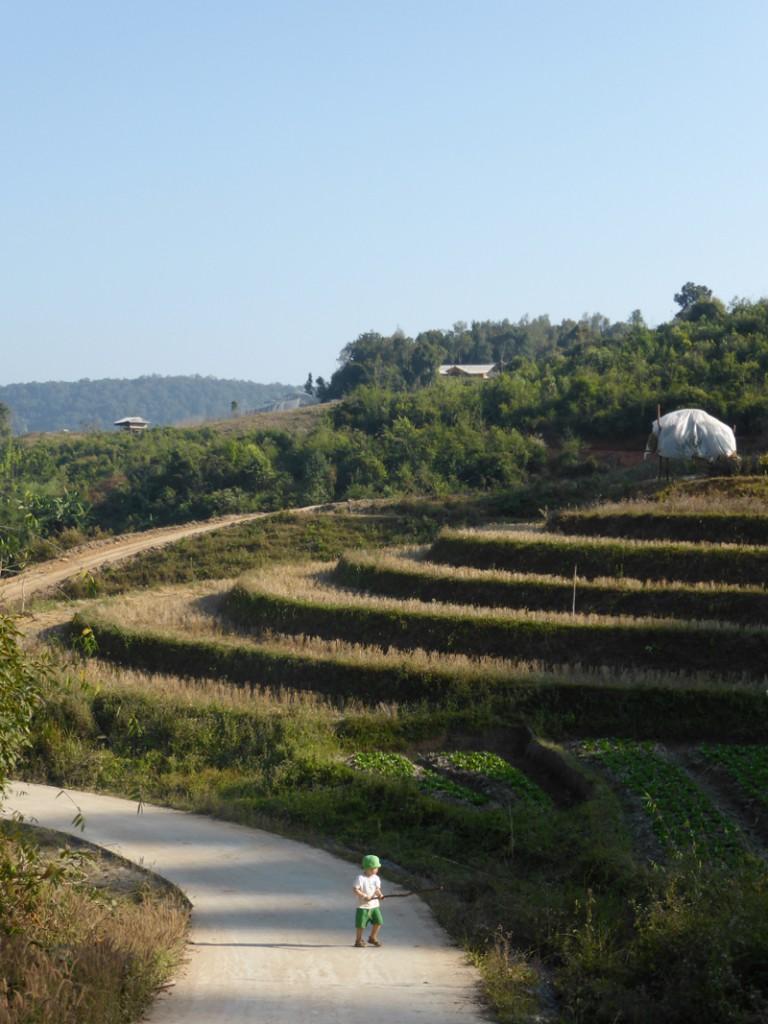 Oh Norden Thailands, du bist so schön! Reisfelder bei Spicy Villa