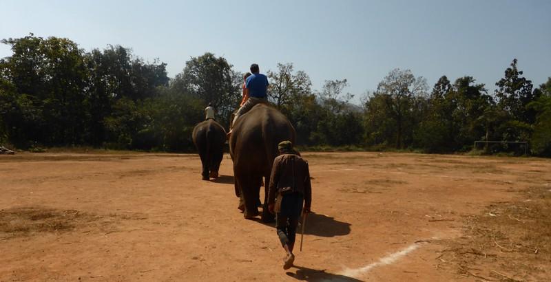 Elefantentreck von hinten
