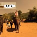 Elefanten reiten im Norden Thailands