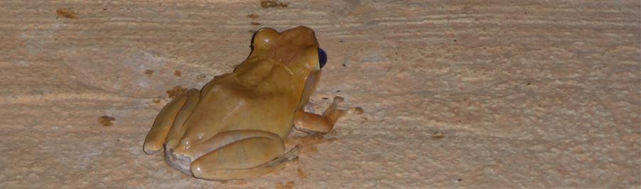 Endlich ein Haustier: Darf ich vorstellen: Froggy, der Frosch!