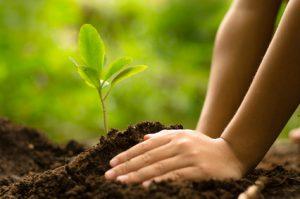 Kinder pflanzen kinder pflanzen junger baum erde