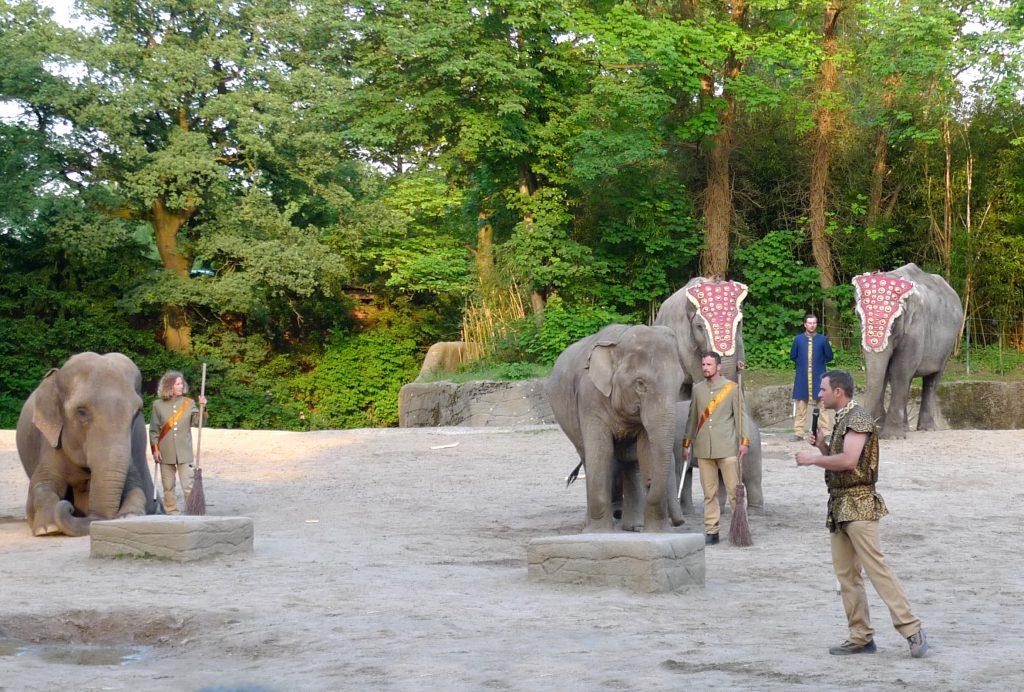 Dschungelnächte hagenbecks Tierpark elefanten