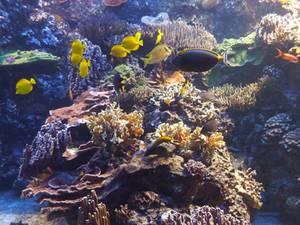 Kleiner Meeresforscher Tierpark Hagenbeck Korallen