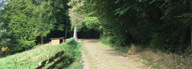 Sachsenwald Aumühle