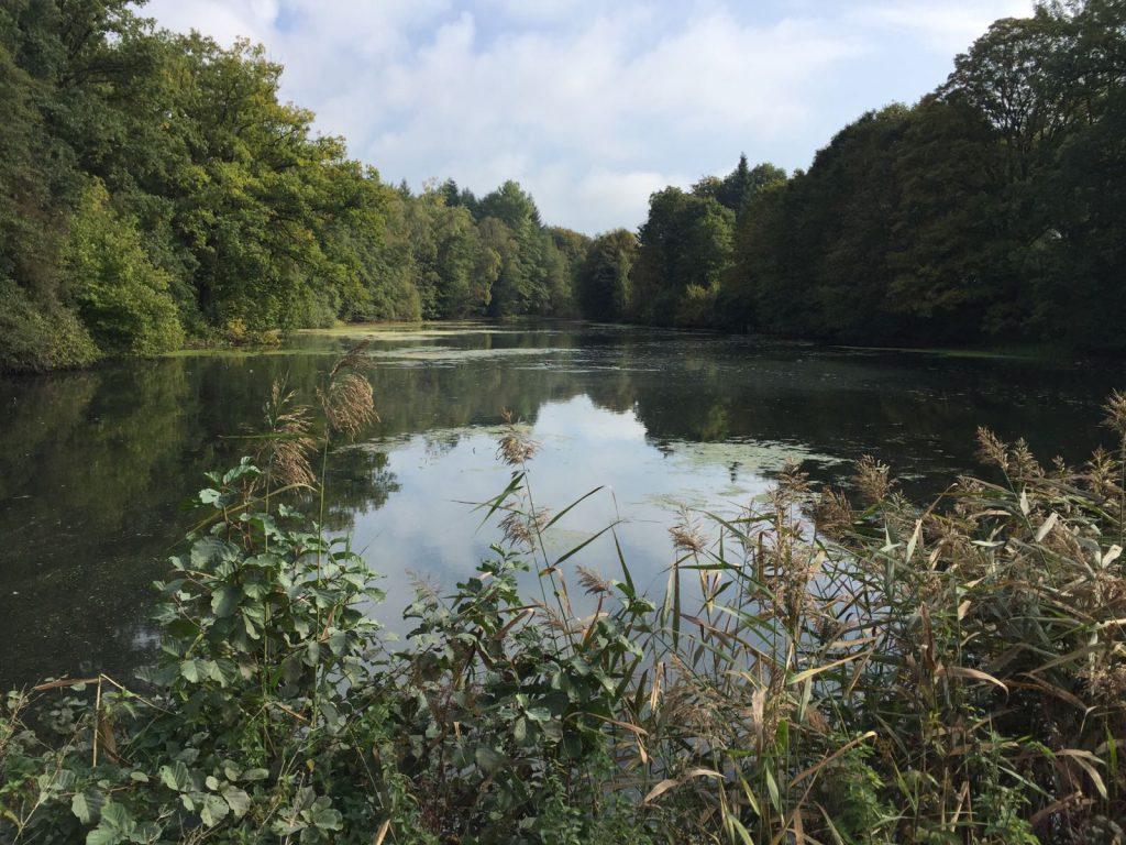 sachsenwald