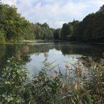 Aumühle: Wanderung im Sachsenwald