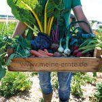 Wohnt ihr noch oder erntet ihr schon? Gemüsegarten mieten in Hamburg