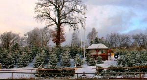 Weihnachtsbaum selbst schlagen tannenbaum kaufen erdbeerhof Glantz