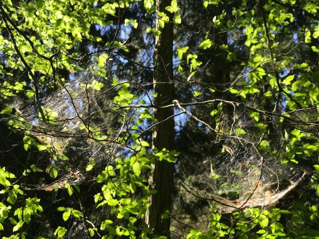 Landal Salztal Paradies Bad Sachsa Harz Landal Green Park
